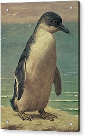 Study Of A Penguin Acrylic Print by Henry Stacey Marks