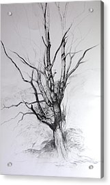 Study Of A Tree Acrylic Print by Harry Robertson
