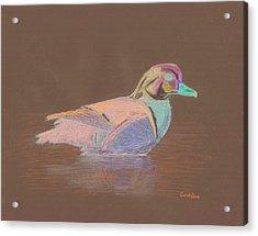 Study Of A Wood Duck Acrylic Print by Cynthia  Lanka