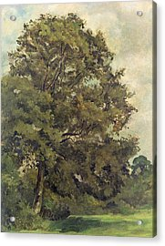 Study Of An Ash Tree Acrylic Print by Lionel Constable