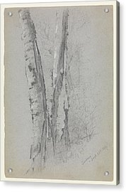 Study Of Birch Trunks Scribners' Acrylic Print by Jervis McEntee