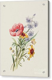 Study Of Wild Flowers Acrylic Print by English School