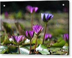 Acrylic Print featuring the photograph Stuff Of Dreams by Suzanne Gaff