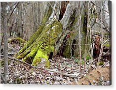 Stump With Moss Acrylic Print by Sean Seal