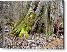 Stump With Moss Acrylic Print