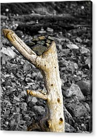 Stump With Rocks - Ogunquit - Maine Acrylic Print by Steven Ralser