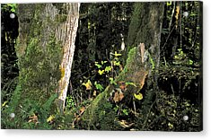 Stump Wyeth Acrylic Print