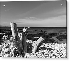 Stumped Acrylic Print
