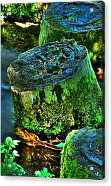 Stumped Acrylic Print by Tom Melo