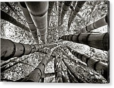Stunning Bamboo Forest Acrylic Print
