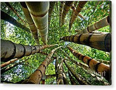 Stunning Bamboo Forest - Color Acrylic Print