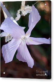 Stunning New Mexico Purple Wildflower Acrylic Print