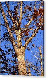 Stunning Tree Acrylic Print