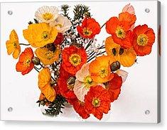 Stunning Vibrant Yellow Orange Poppies  Acrylic Print
