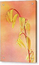 Stylized Baby Chestnut Leaves Acrylic Print