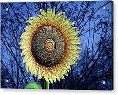 Stylized Sunflower Acrylic Print by Tom Mc Nemar