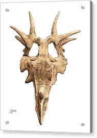Styracosaur Skull Acrylic Print