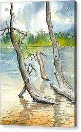 Submerged Cottonwood Acrylic Print