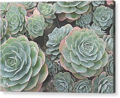 Succulent 2 Acrylic Print