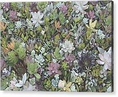 Succulent 8 Acrylic Print
