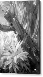 Succulent Delight Acrylic Print by Richard Rizzo
