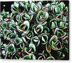 Acrylic Print featuring the photograph Succulent Fantasy by Ann Powell