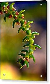 Succulent Hanging Acrylic Print