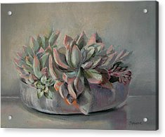 Succulent Acrylic Print by Synnove Pettersen