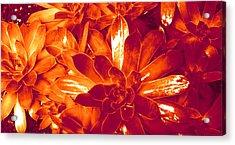 Succulents #1 Acrylic Print