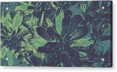 Succulents #2 Acrylic Print