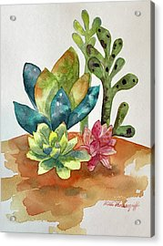 Succulents Acrylic Print