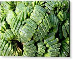 Succulents Acrylic Print by Mark Barclay