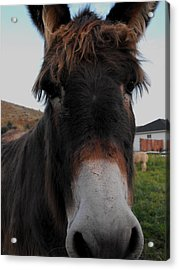 Such A Cute Face Acrylic Print by Jan  Tribe