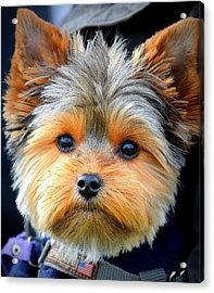Such A Face Acrylic Print