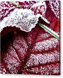 Sugar Coated Morning Acrylic Print by Gwyn Newcombe