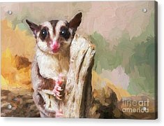 Sugar Glider - Painterly Acrylic Print