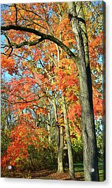 Acrylic Print featuring the photograph Sugar Maple Stand by Ray Mathis