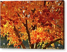 Acrylic Print featuring the photograph Sugar Maple Sunset by Ray Mathis
