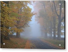 Sugar Maples On A Misty Country Road Acrylic Print by John Burk