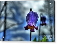 Sugarbowl Leather Flower Acrylic Print