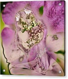 Sugar....sweetie Acrylic Print