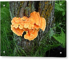 Sulfur Shelf Fungus On A Tree Acrylic Print