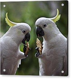 Sulphur Crested Cockatoo Pair Acrylic Print by Avalon Fine Art Photography