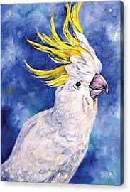 Sulphur-crested Cockatoo Acrylic Print