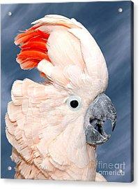 Sultan Acrylic Print