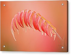 Sumac Branch Acrylic Print