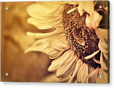 Acrylic Print featuring the photograph Summer Afternoon by Douglas MooreZart
