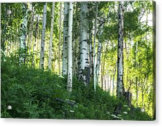 Acrylic Print featuring the photograph Summer Aspen Forest by Tim Reaves