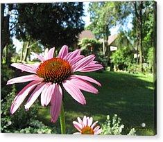 Acrylic Print featuring the photograph Summer Backyard Flowers 3068 by Maciek Froncisz