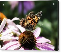 Summer Beauty Acrylic Print